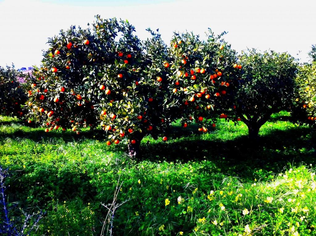 arbre-de-noel-sicilien-1024x764
