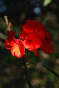 fleurs-0071-200x300