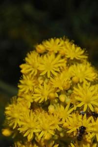 fleurs-008-200x300