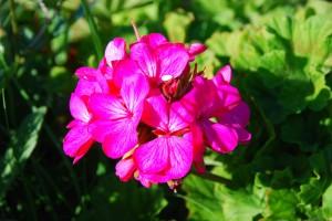 fleurs-013-300x200