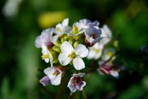 fleurs-0211-300x200