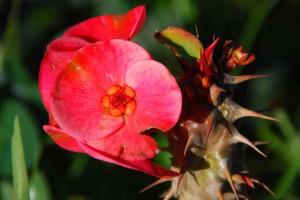 fleurs-037-300x200
