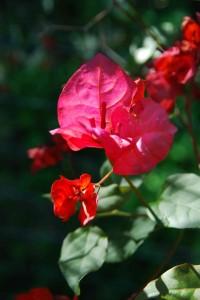 fleurs-088-200x300