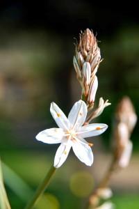 fleurs-1221-200x300