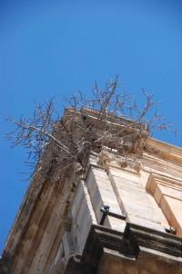 arbre-sur-chiesa-200x300